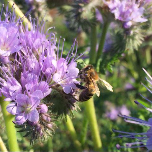 Eintauchen in die Welt der Bienen: Multifunktionales Bienenzentrum