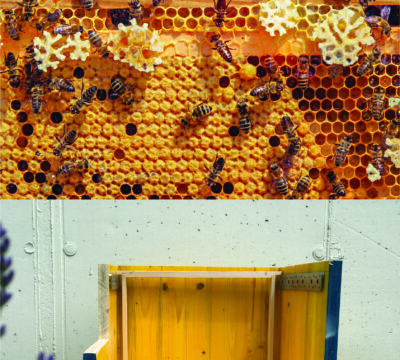 Product development of a bee hive heating system for combatting the Varroa mite
